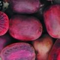 Актинидия аргута сорт Пурпурна Садова